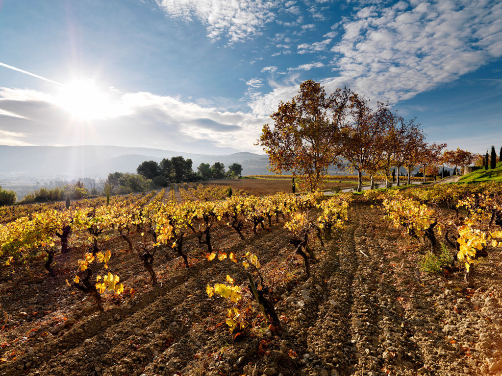 Autumn-at-La-Creueta-Vineyard (1).jpg
